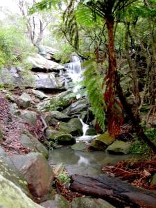 Boronia Park Tipperary Falls